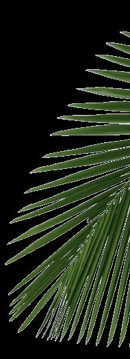 palm_br