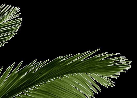palm_bl